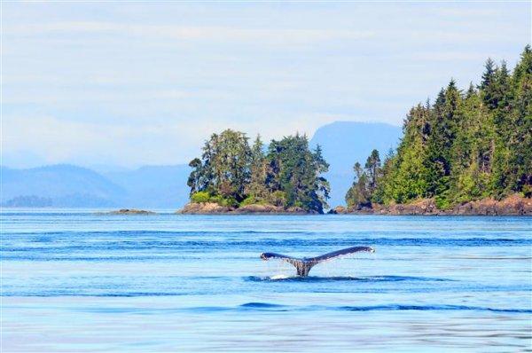 humpback-whale-vancouver-island.jpg