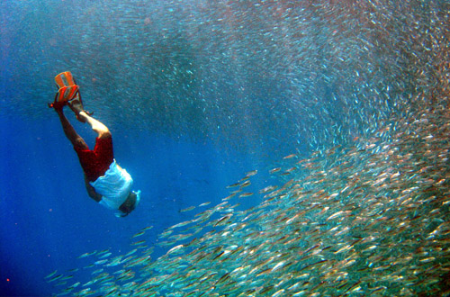indian-ocean-diving.jpg