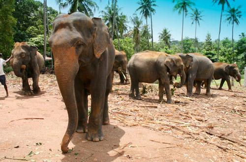 sri-lanka-elephant.jpg