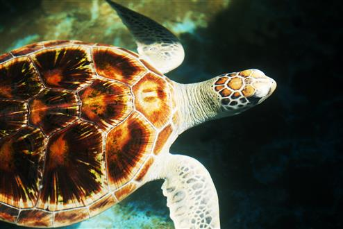 turtle_sri_lanka (Custom).jpg